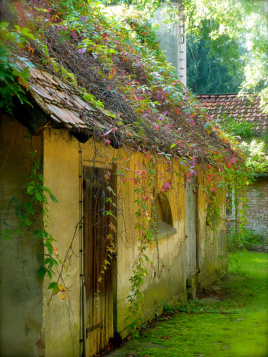An old, overgrown but picturesque house in Brandenburg with creepers on the walls
